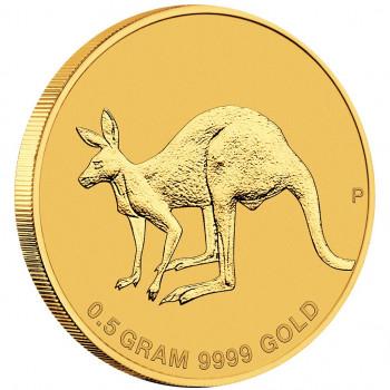 AUSTRALIE 2019 - Kangourou...